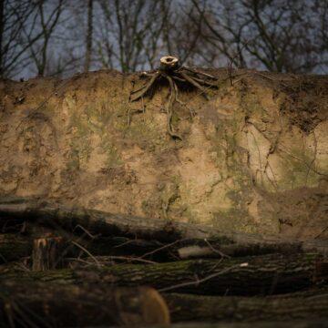 #2week: Martwa Natura