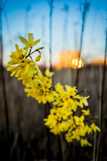 #2week: Wiosna